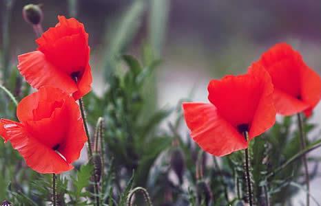 primavera_in_carnia